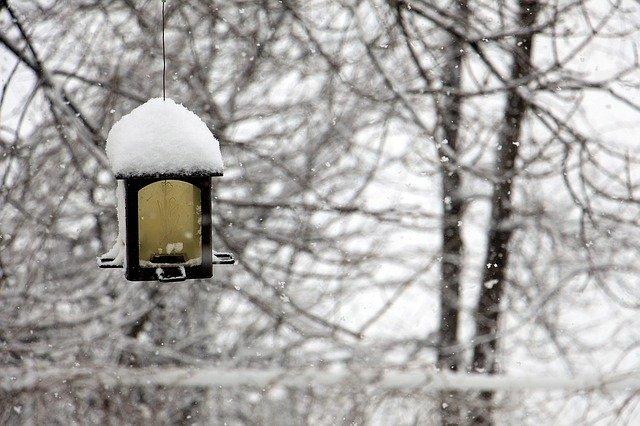 ptačí krmítko v zimě