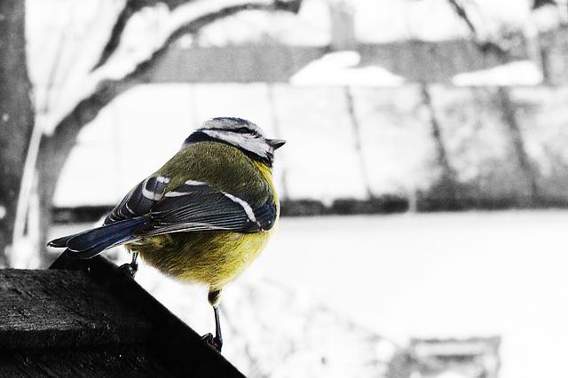ptáček na krmítku