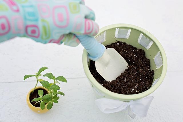 přesazování rostlinek