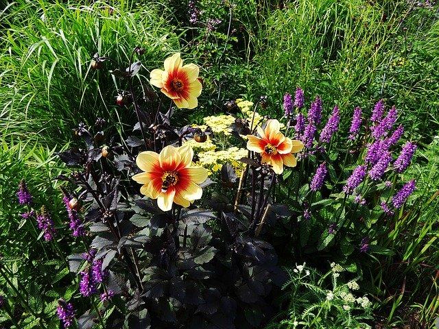 květiny na záhoně