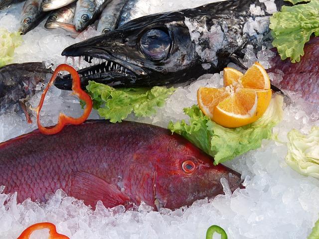ryby v ledu