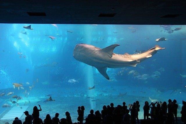velryba v akváriu