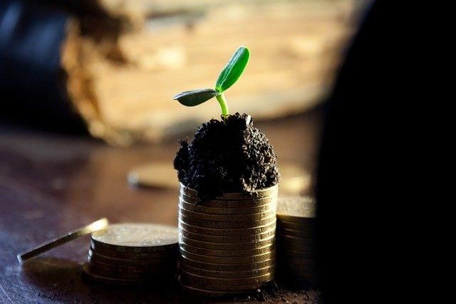 rostlinka na mincích.jpg