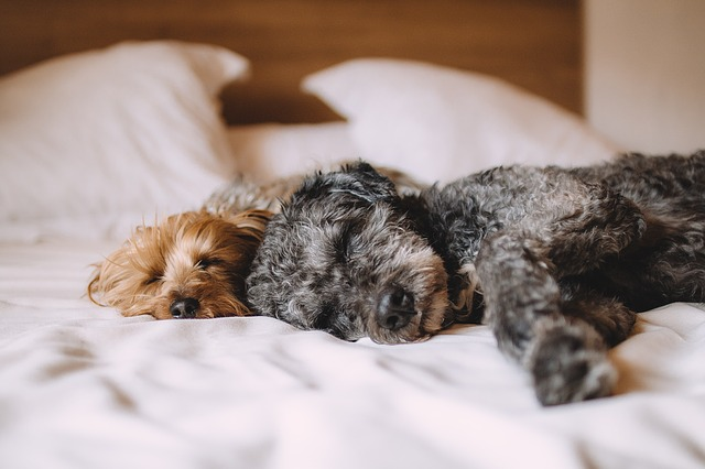 pejsci v posteli.jpg