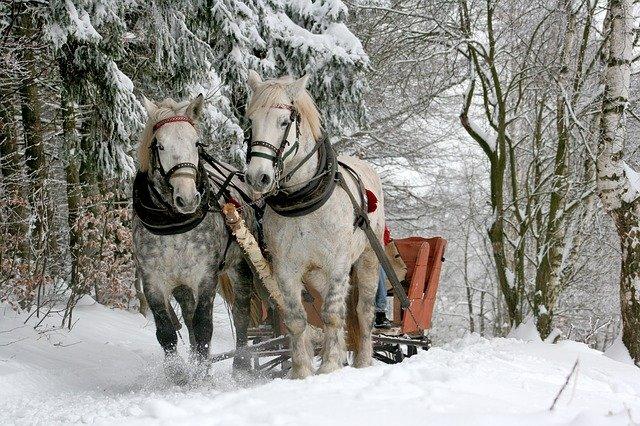 koňské vzpřežení