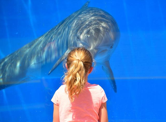 dívka u delfína